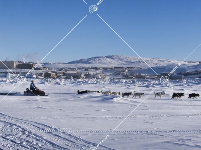 Dog Sledding on Frobisher Bay