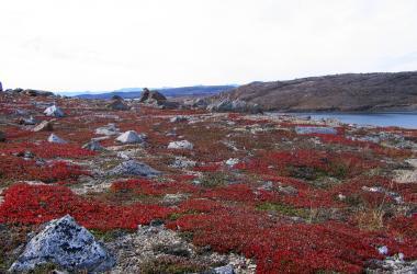 fall colours on the tundra