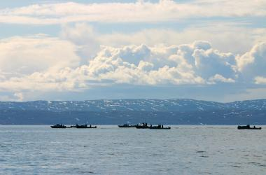 many boats whale hunting
